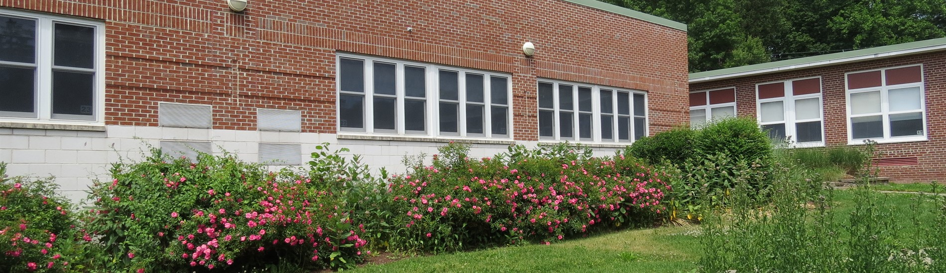 WCMS COURTYARD ROSES